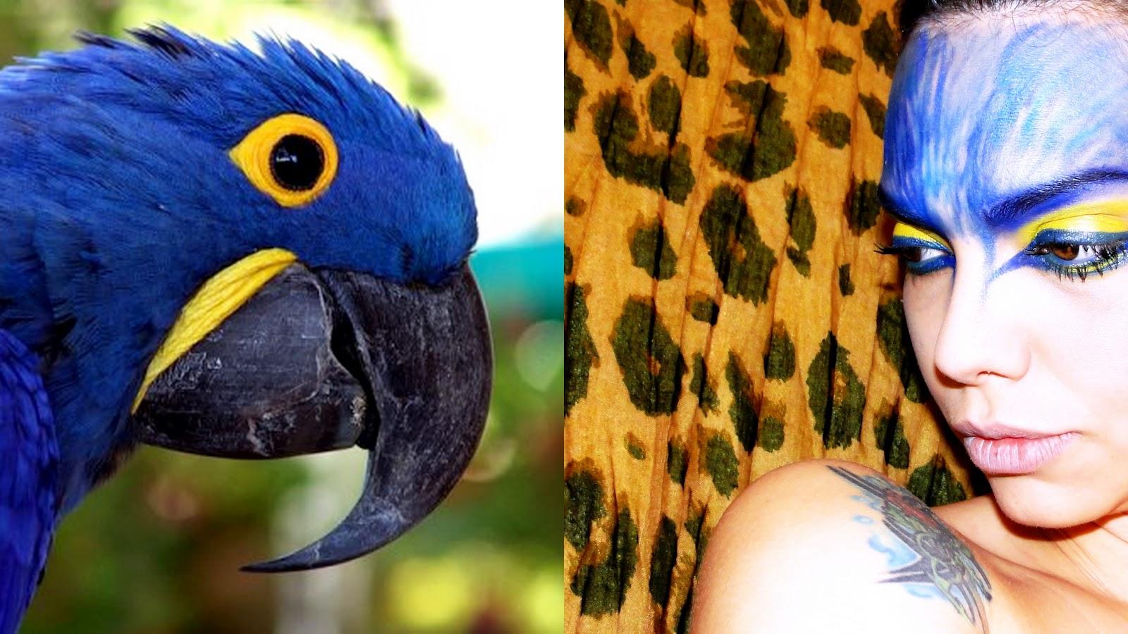 Arara-azul: A arara-azul-grande, originalmente encontrada nas matas brasileiras.Possui plumagem azul com um anel amarelo em torno dos olhos, e fita da mesma ... - ar1